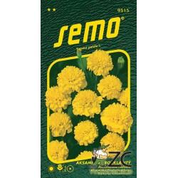 Aksamitník rozkladitý - Petit žlutý 1g