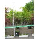 Acer palmatum 9001 C 30