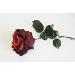 Um. Růže Bordeaux