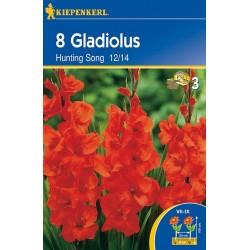 Gladiolus Hunting Song ks