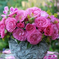 Růže ELIZA velkokvětá 2L ADR